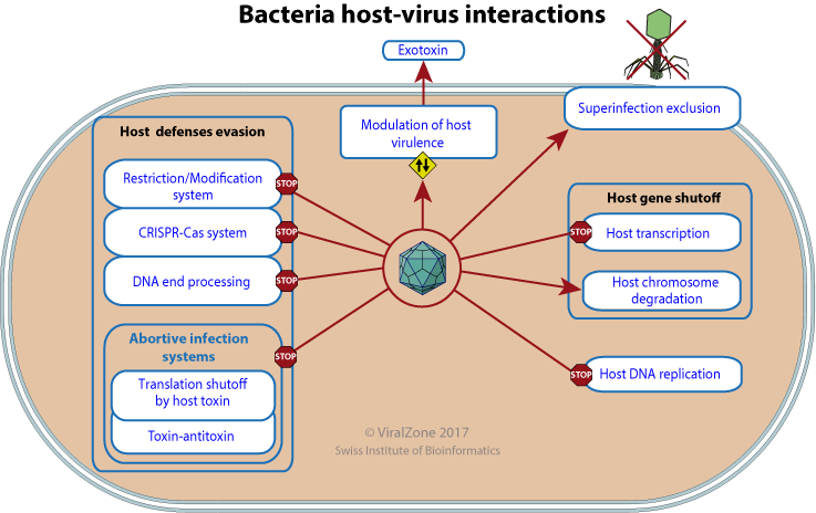 Host virus interactions ccuart Image collections