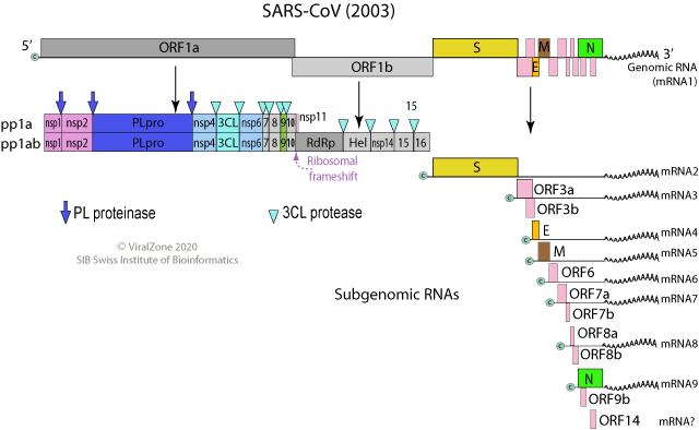 SARS_genome.png